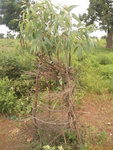 Agriculture Reboisement ADSES3