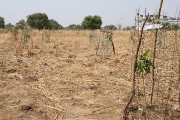 Agriculture Reboisement école de Palagré un des hameaux de Mankoula 2011 (4)
